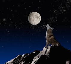 満月と狼男